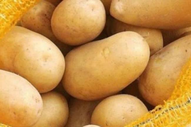 ارتفاع جنوني بأسعار البطاطا والبندورة.. تموين دمشق: الانخفاض يحتاج إلى شهرين