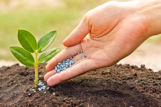 خبير زراعي : رفع أسعار الأسمدة سيؤدي لارتفاع بأسعار المنتجات الزراعية وتراجع الإنتاج