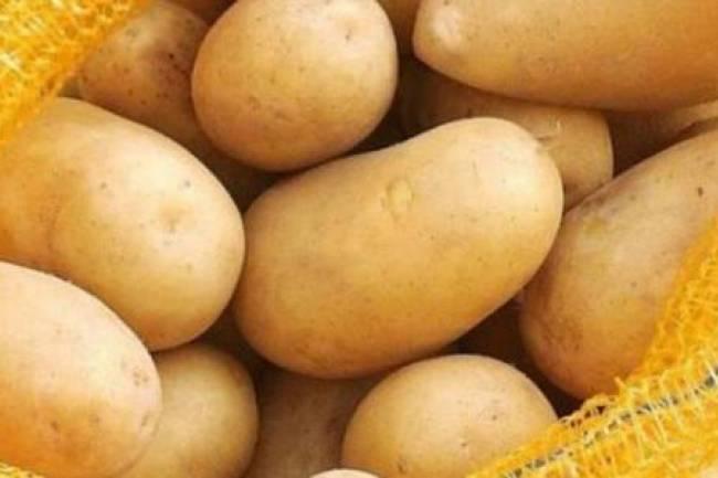 بعد وصول سعر الكيلو لنحو 800 ليرة .. الحكومة تسمح باستيراد البطاطا بشكل فوري لخفض سعرها
