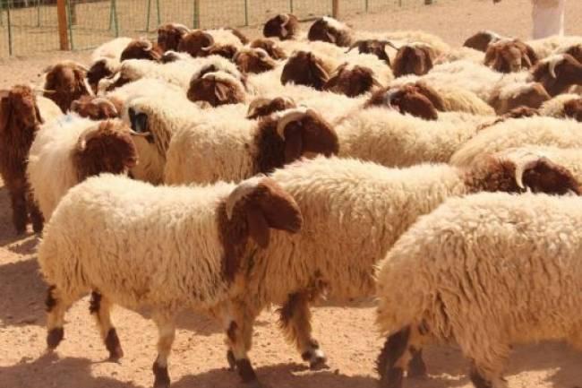 أسعار اللحوم تستمر بالارتفاع وأصغر خروف بنص مليون ليرة