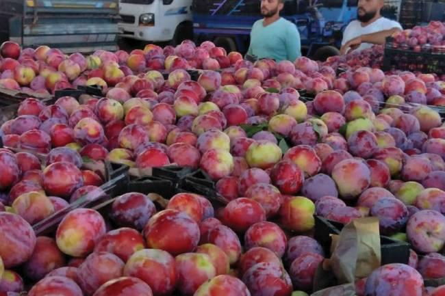 اتحاد غرف التجارة: لا تأثير لتصدير الفواكه في ارتفاع أسعارها الحالي