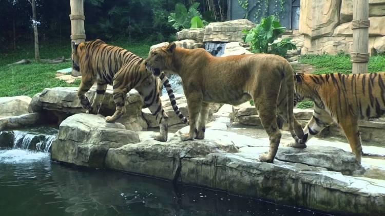 محافظة دمشق ترفض مشروع تطوير حديقة حيوانات العدوي مجاناً وتوضح الأسباب
